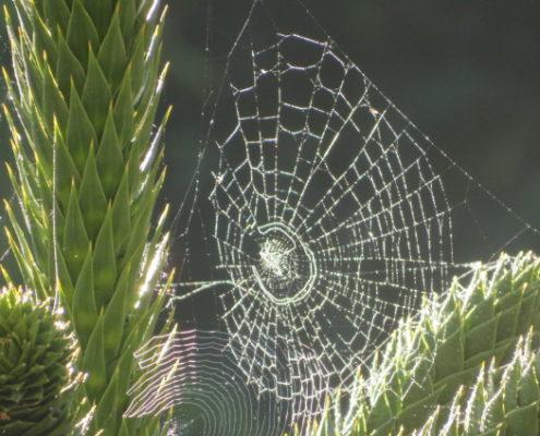 Spider Puzzle