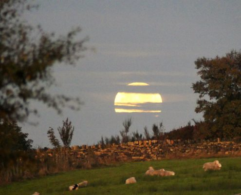 Harvest Moon Set