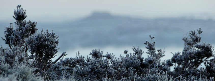 Frosty Chevin